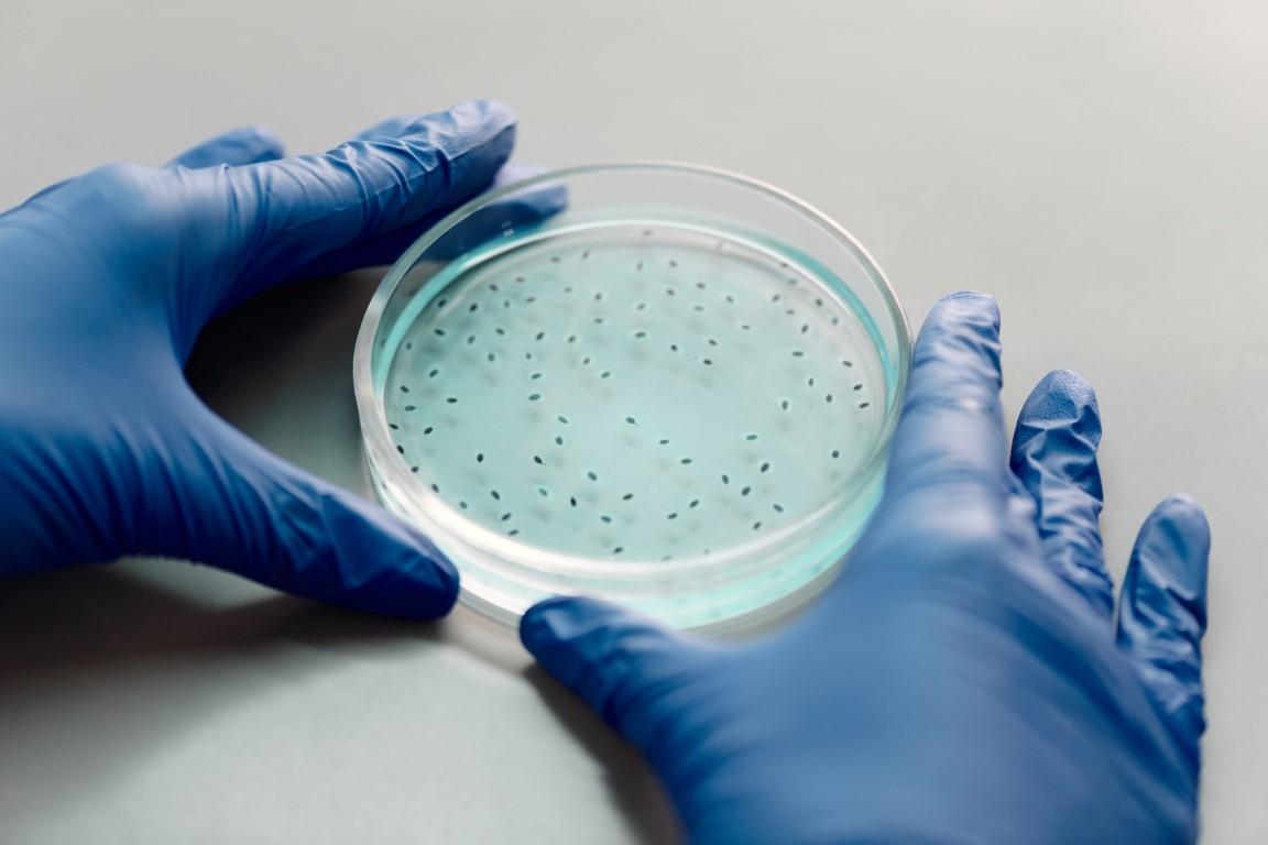Foto zweier blau-behandschuhter Hände, die eine Petrischale mit blau gefärbtem Nährmedium auf dem Kolonien wachsen halten.